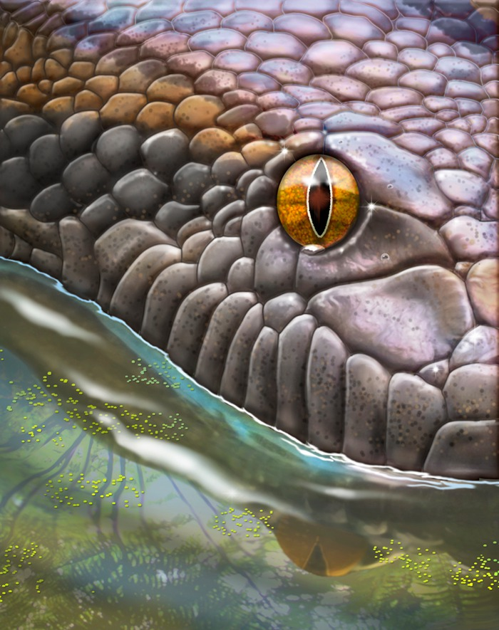 Titanoboa Illustration for Smithsonian Magazine by Paul Mirocha